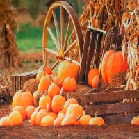 200x300cm 7X10ft Photography Background Pumpkin Farm